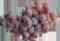 vigne_ico